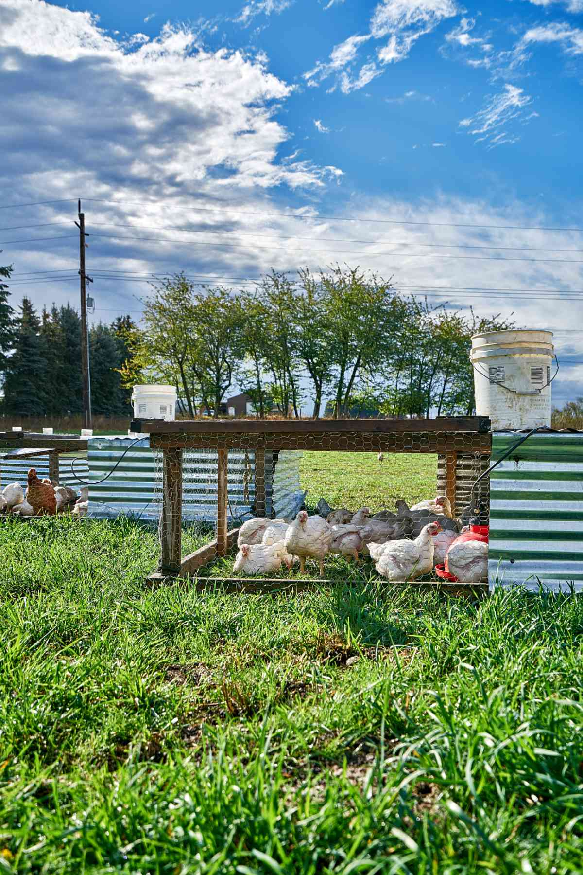 Free range chicken coops.